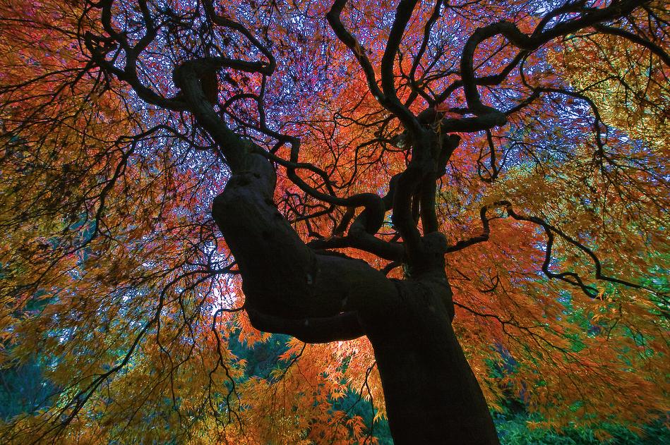 Savoring Autumn