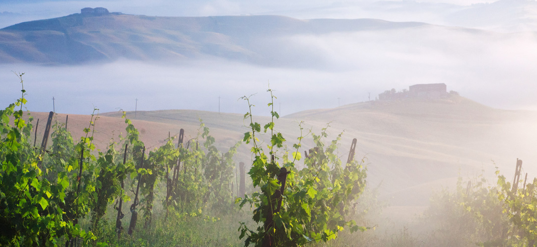 Fall in Tuscany: Wine, Olive Oil, and Truffles. Oh My!