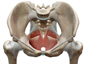 pelvic-floor