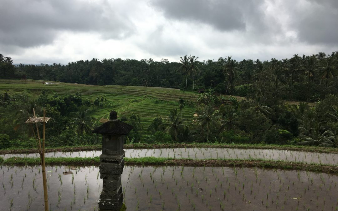 Bali Reflection: Having Gratitude for Having Existence